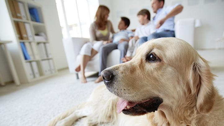 cs living with pet allergies 722x406