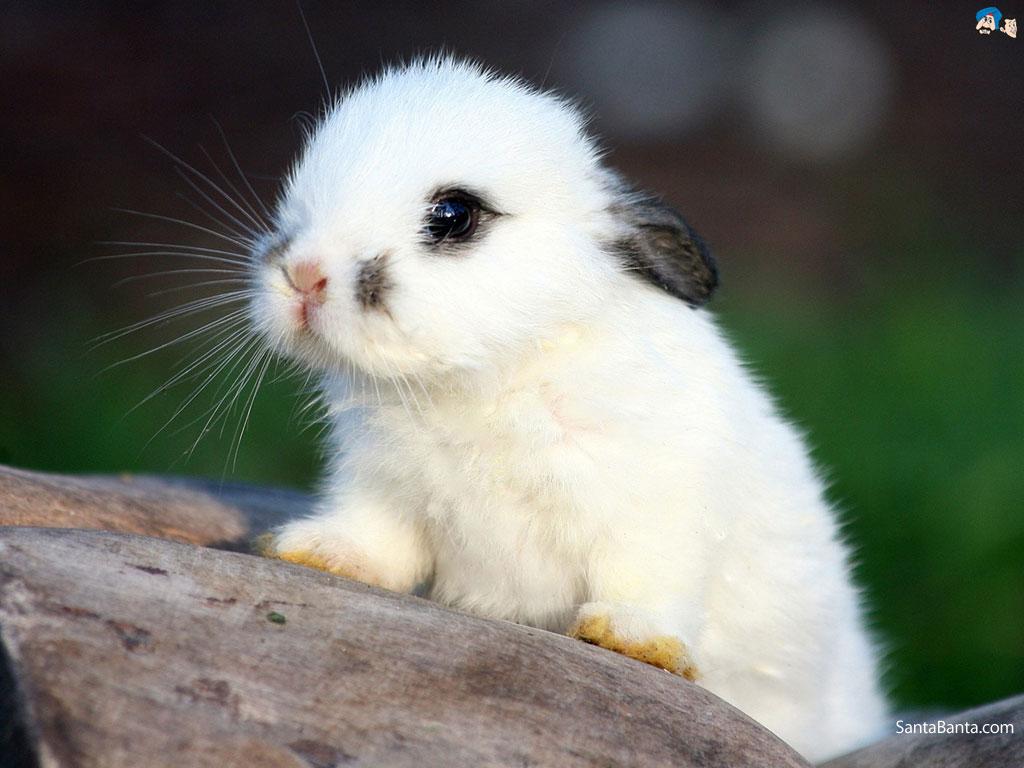 rabbits 12a