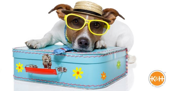 pet summer traveling