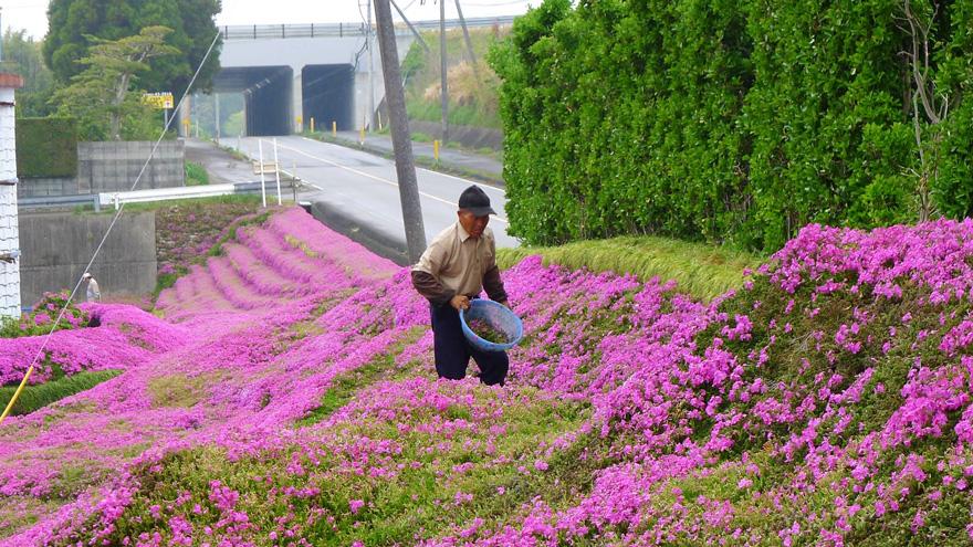 husband plants flowers blind wife ku