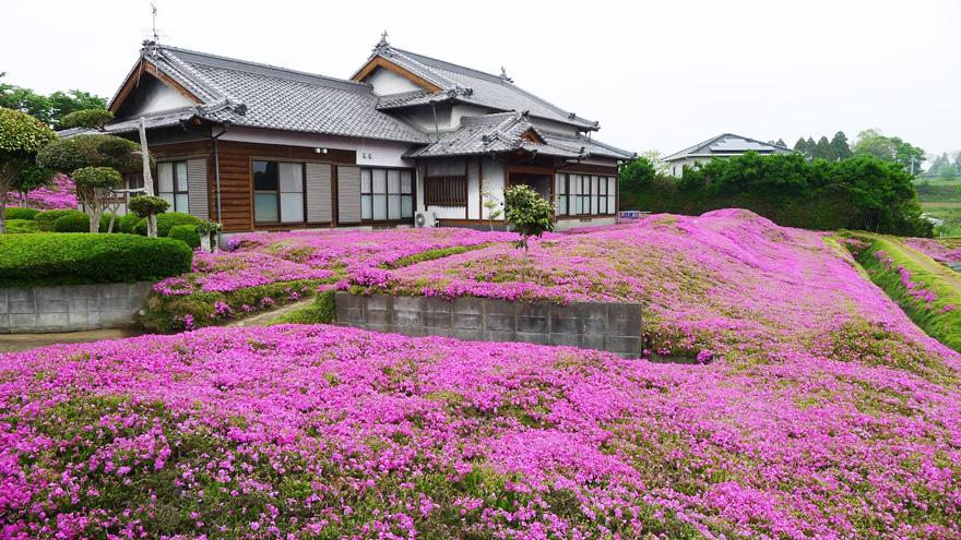 plants flowers blind wife kuroki shintomi 7