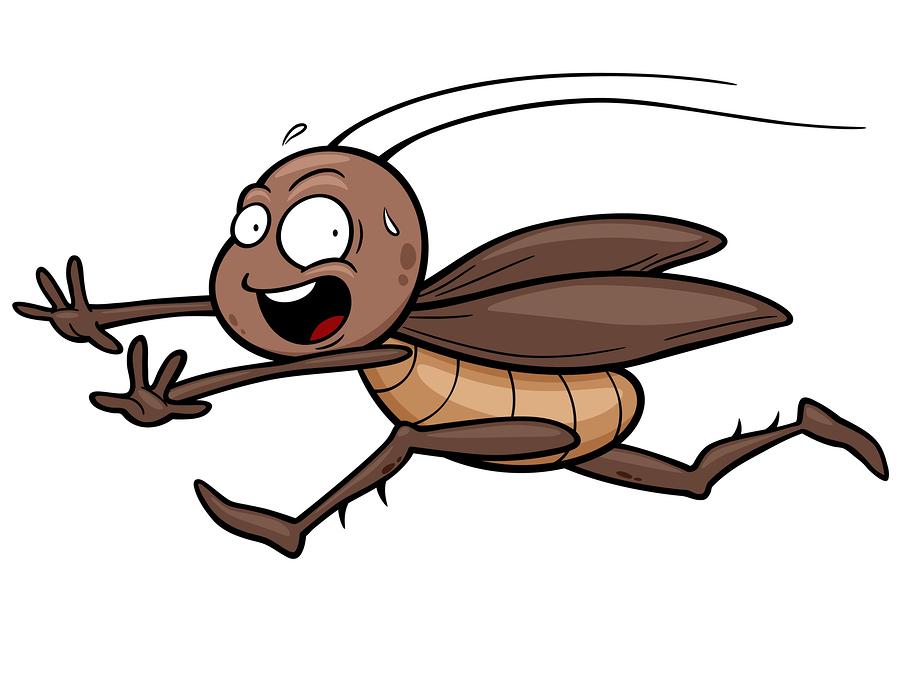 fun cockroach