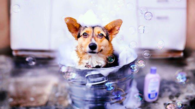 quante volte lavare il cane