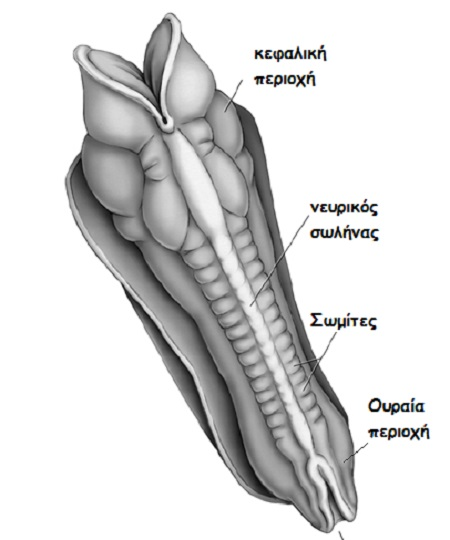 anaptixi kraniou morou 1