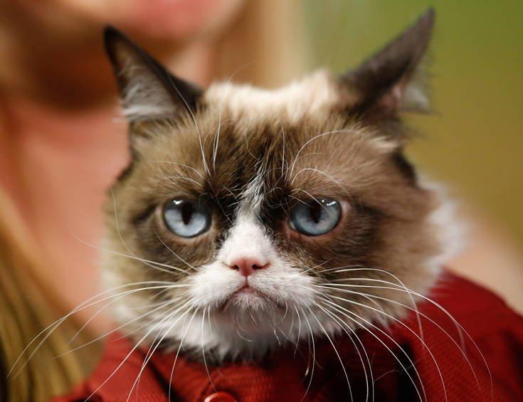 grumpy cat 8