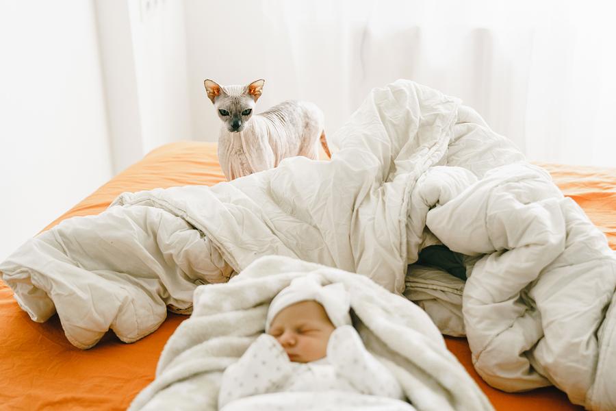 Νόσος εξ ονύχων γαλής Τι κινδύνους κρύβει για το μωρό σας