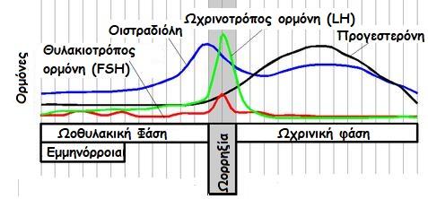 Estradiol.Cycle