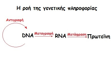 antigrafh dna gonidia pos perna apo genia se genia 1