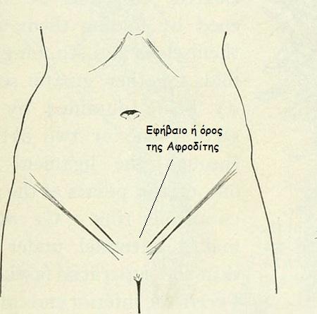 anatomia aidiou2
