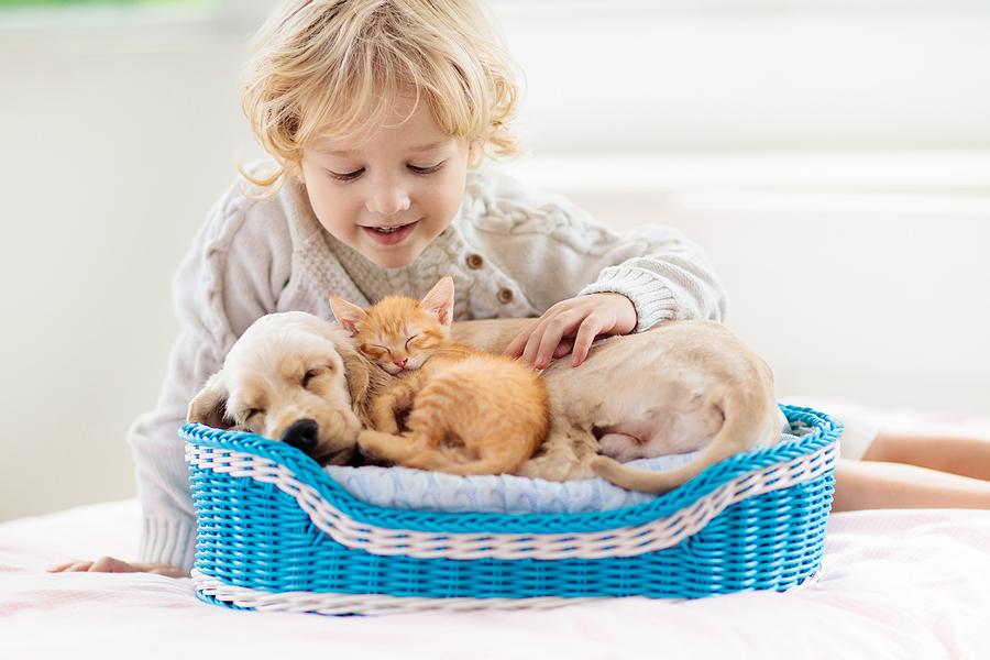 bigstock Child Dog And Cat Kids Play 320029420
