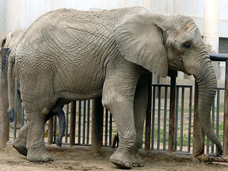 Ελεφαντάκι κλαίει απαρηγόρητο επειδή το έδιωξε η μητέρα του! (βίντεο)
