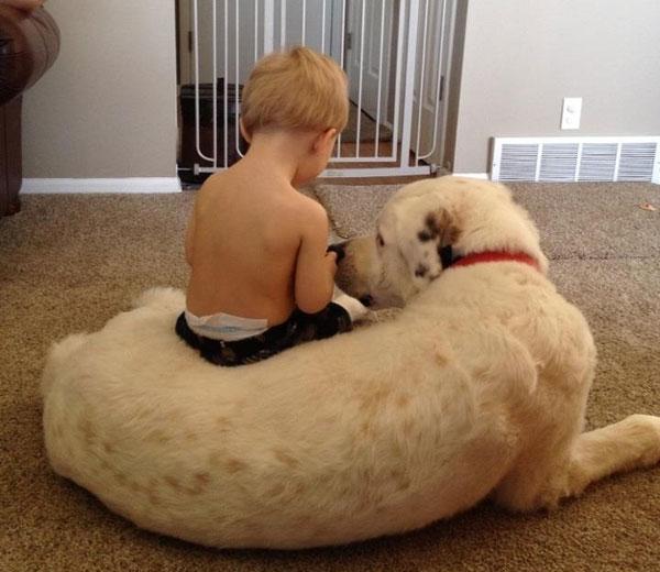 Δείτε τις πιο όμορφες φωτογραφίες μωρών με σκύλους!
