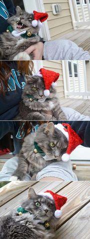 Κι όμως κάποιοι ανυπομονούν να τελειώσουν οι γιορτές! (φωτογραφίες)