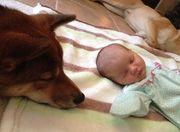 Μια νέα αγάπη γεννήθηκε! Το νεογέννητο κοριτσάκι και το σκυλάκι (εικόνες)