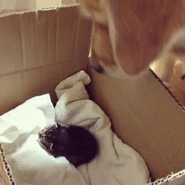 Η μαμά του το παράτησε και βρήκε την στοργή και την αγάπη σε έναν σκύλο! (εικόνες)
