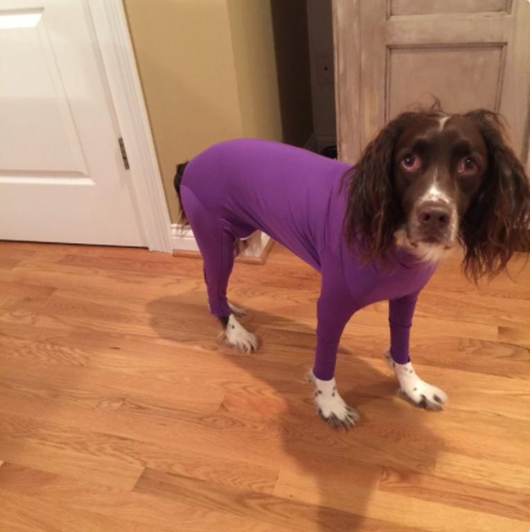 Δεν υπάρχουν αυτές οι φωτογραφίες: Σκύλοι είναι τα απόλυτα fashion icons (pics)