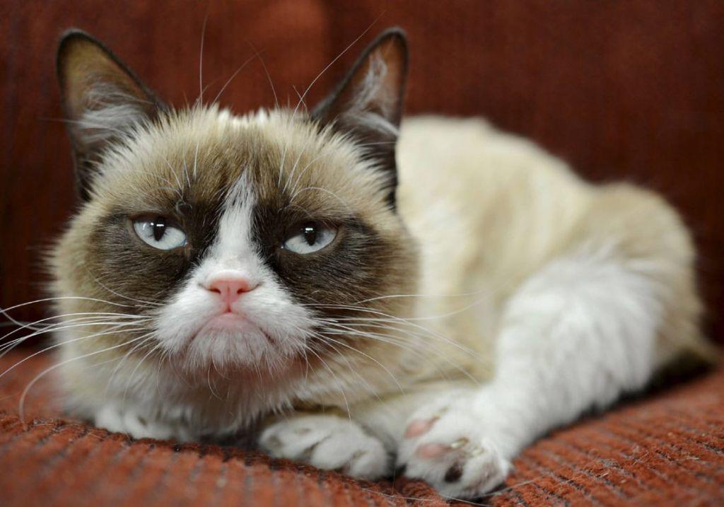 Γνωρίστε την πιο «ξινισμένη» και πλέον, πλούσια γάτα του κόσμου (pics)
