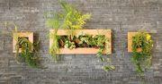 Απίθανες ιδέες για να κρεμάσετε τα φυτά στους τοίχους του σπιτιού σας