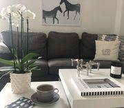 Διακοσμήστε το καθιστικό σας με όμορφα φυτά (pics +vid)