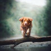 Αυτές οι φωτογραφίες με σκύλους δεν είναι σαν τις άλλες (pics)