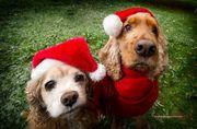 Σκυλάκια ντύθηκαν βοηθοί του Άγιου Βασίλη: Δείτε πόσο χαριτωμένα είναι στις φωτογραφίες (pics)