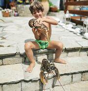 Χθες ο γνωστός μπαμπάς, μοιράστηκε μαζί μας μία νέα φωτογραφία του γιου του. Ο Μανώλης απολαμβάνει τις καλοκαιρινές του διακοπές παίζοντας με.... καραβίδες! Απίστευτο;