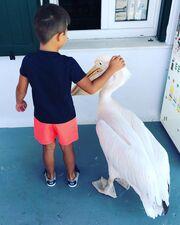 3. Να αγαπούν τα ζώα: Φαίνεται πως ο Γιώργος Λιάγκας έχει διδάξει στα παιδιά του να δείχνουν σεβασμό στα ζώα. Ο σεβασμός στα ζώα άλλωστε έιναι το πρώτο βήμα για να συμπεριφέρονται τα παιδιά μας με ανθρωπιά.