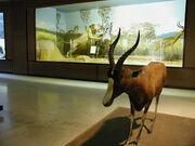 Μουσείο Ζωολογίας Πανεπιστημίου Αθηνών