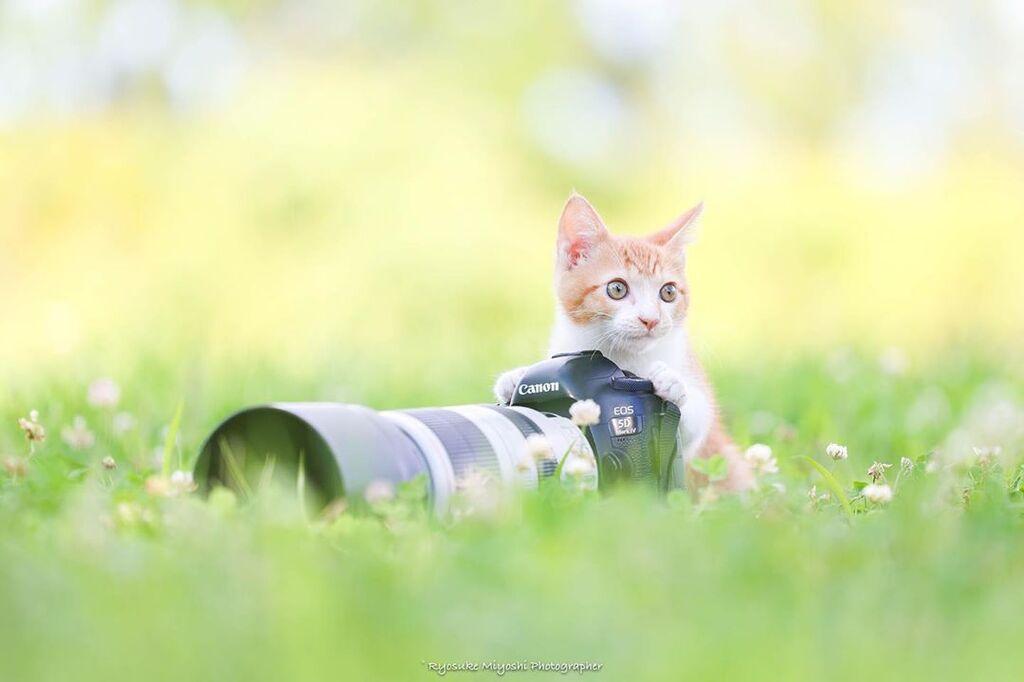 Φωτογράφος απαθανατίζει μικρά γατάκια στα πιο υπέροχα στιγμιότυπα