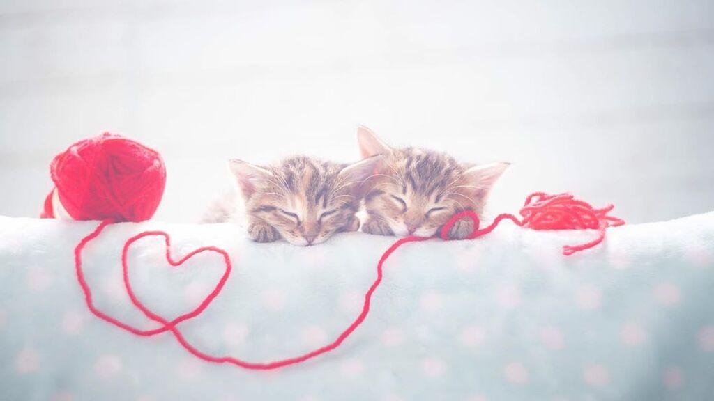 Αυτά τα μωρά γατάκια θα σας κλέψουν την καρδιά - Δείτε υπέροχες φωτογραφίες