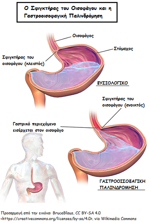 Πώς αλλάζει η λειτουργία του στομάχου κατά την εγκυμοσύνη;