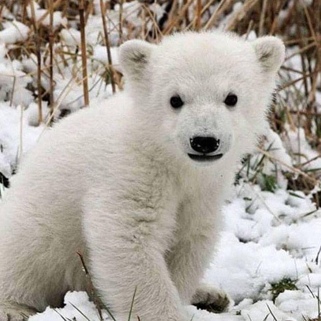 instagram @National Wildlife Federation