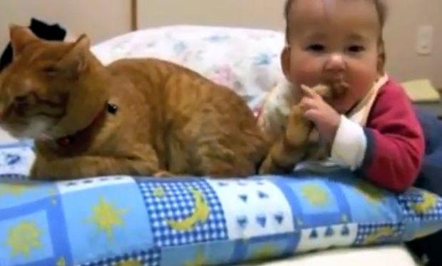 Video: Η πιο υπομονετική γάτα στον κόσμο!