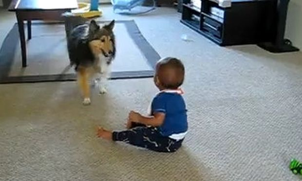 Βίντεο: Το μωρό γελάει, ο σκύλος τρέχει και… πάει λέγοντας!