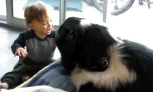 Βίντεο: Ο σκύλος τον κάνει και γελάει υστερικά!