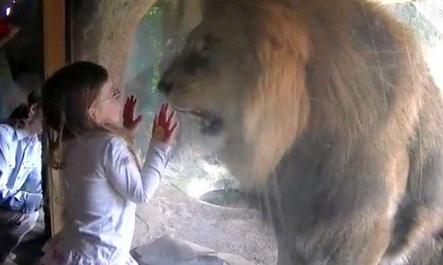 Η πιτσιρίκα που έκανε το λιοντάρι...έξαλλο!
