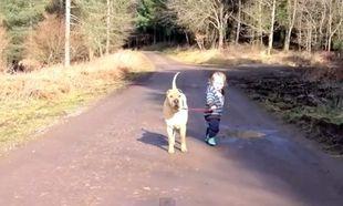 Βγάζει βόλτα το σκύλο που είναι μεγαλύτερος από εκείνον!
