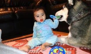 Το μωρό και το Χάσκι θέλουν το ίδιο παιχνίδι. Και τώρα;