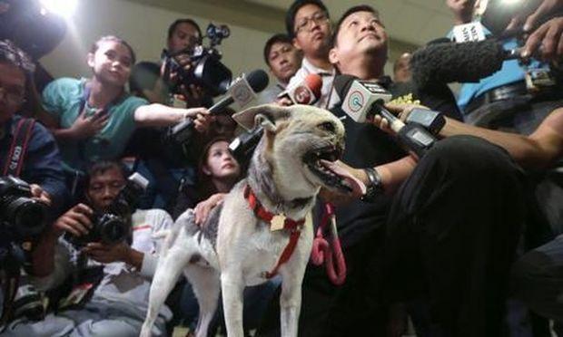 Σκυλίτσα έσωσε δύο κοριτσάκια και την υποδέχτηκαν στην πόλη της σαν ήρωα!