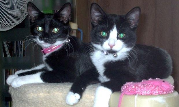 Απίστευτο: Δύο γάτες έσωσαν την ζωή μιας εγκύου