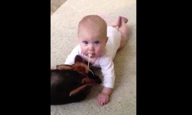 Απίθανο βίντεο με ένα μωρό και ένα κουτάβι!