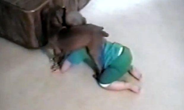 Δείτε μωρό και σκυλάκι να παλεύουν! (βίντεο)