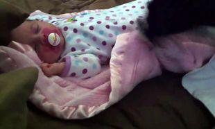 Απιστεύτη τρυφερότητα! Σκύλος σκεπάζει μωρό που έχει αποκοιμηθεί! (βίντεο)