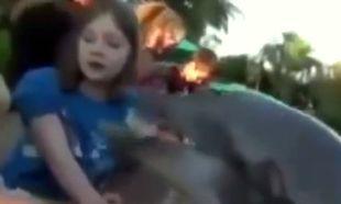 Δελφίνι δάγκωσε 8χρονο κοριτσάκι! (βίντεο)