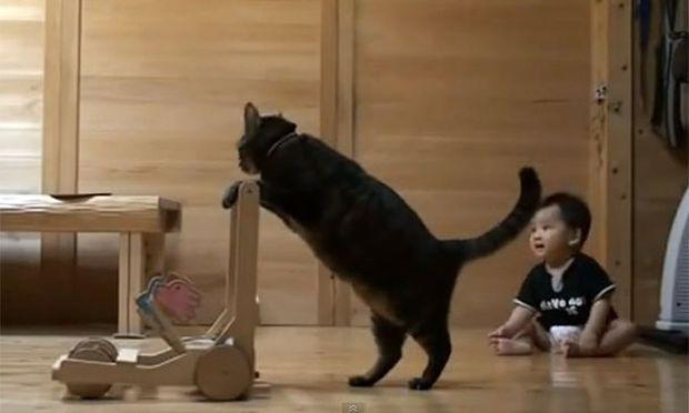 Απίστευτο: Γάτα μαθαίνει σε μωρό πώς να περπατά! (βίντεο)