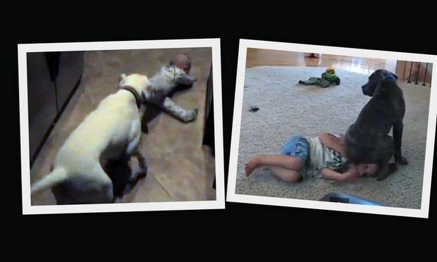 Oταν παιχνιδιάρικα σκυλιά συναντιούνται με απίθανα μωρά! (βίντεο)