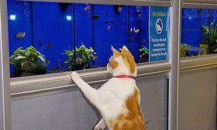 Τι γυρεύει μία γάτα σε ένα pet shop καθημερινά; Δείτε τις φωτογραφίες και θα καταλάβετε