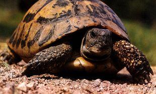 Δείτε τη χελώνα με πόδι…από lego!