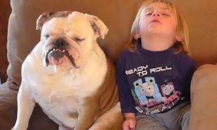 Τι γίνεται όταν ένα παιδί και το σκυλί του νυστάζουν ταυτόχρονα! Δείτε το απολαυστικό βίντεο