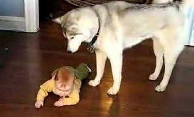 Ποιος βοηθάει ένα μωρό να μπουσουλάει; Δείτε το βίντεο!